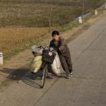 В западных районах КНДР из-за засухи погибает урожай зерновых культур