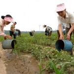 Продолжительная засуха в КНДР может стать самой сильной с 2001 года