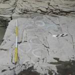 В Южной Корее у скалы с петроглифами обнаружили следы динозавров