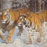 Эксперты WWF заявили, что популяцию диких тигров в Азии еще можно восстановить