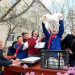 Проводится кролиководство в порядке массового движения